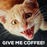 5 Bag sample pack in 2019 | Coffee, Coffee humor, Coffee company #desparateForCoffeeQuotes