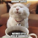 null - cat good morning coffee meme