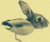 Ohio Coffee Roaster - duck rabbit coffee