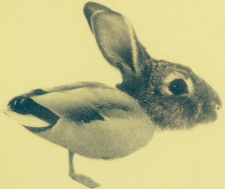 duck rabbit coffee