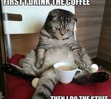 null - First I drink the coffee before I do the stuff in the morning cat meme.