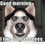 Good morning. I like coffee dog image meme