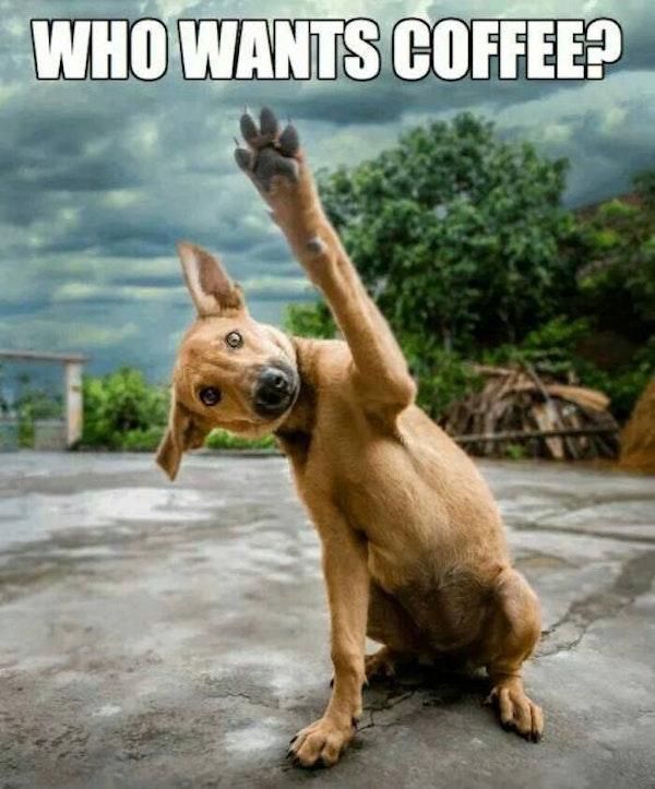 Who wants coffee funny dog image meme