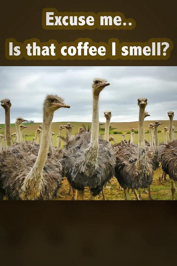 Coffee Memes & Quotes | I Love Coffee! | Coffee, Coffee drinks, I ... #iLoveCoffee