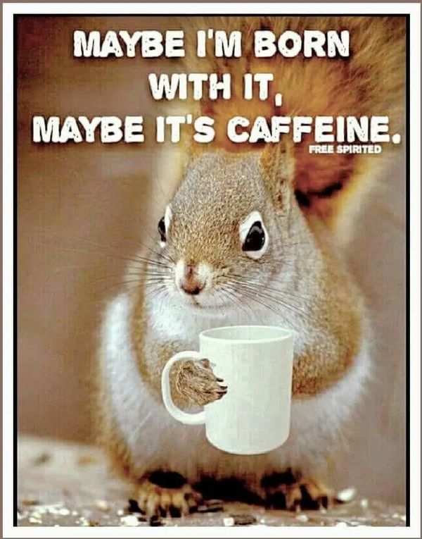 Pin by Theresa Dosh on All Things Coffee | Coffee meme, Coffee ... #iLoveCoffee