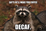 Say's he'll make you coffee DECAF. - Evil Plotting Raccoon - quickmeme #decafCoffee