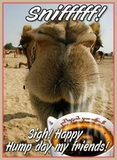 Camel meme Happy Hump Day quote. | Hump Day | Wednesday coffee ... #goodMorningCoffee