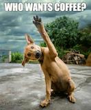 Who Wants Coffee Dog | The Coffee Life | Coffee humor, Coffee ... #funnyCoffee