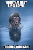 Top 25 Funny Coffee Quotes   Hilarious   Animals, Funny animals ... #sarcasticCoffee