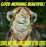 60 Wednesday Coffee Memes, Images & Pics to Get Through the Week #sarcasticCoffee