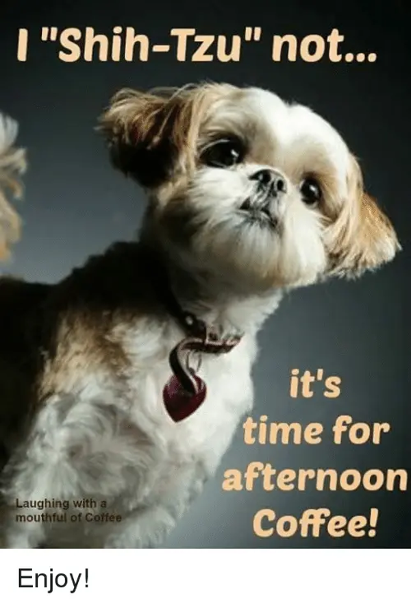 Shih-Tzu Not It's Time for Afternoon Laughing With a Coffee ... #afternoonCoffee