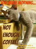 Too much morning, not enough coffee. | Cats Meow!! in 2019 ... #notEnoughCoffee